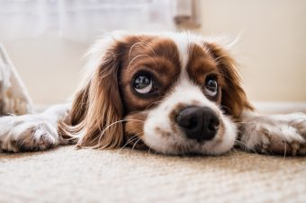 2018-08-Jupps-Rid-your-carpet-of-pet-urine-in-5-easy-steps