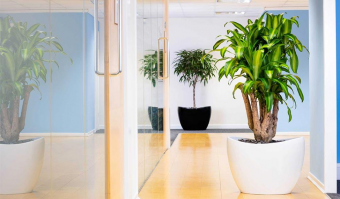 Make your office greener Perth Jupps floorcovering