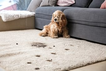 How to get rid of stubborn carpet stains