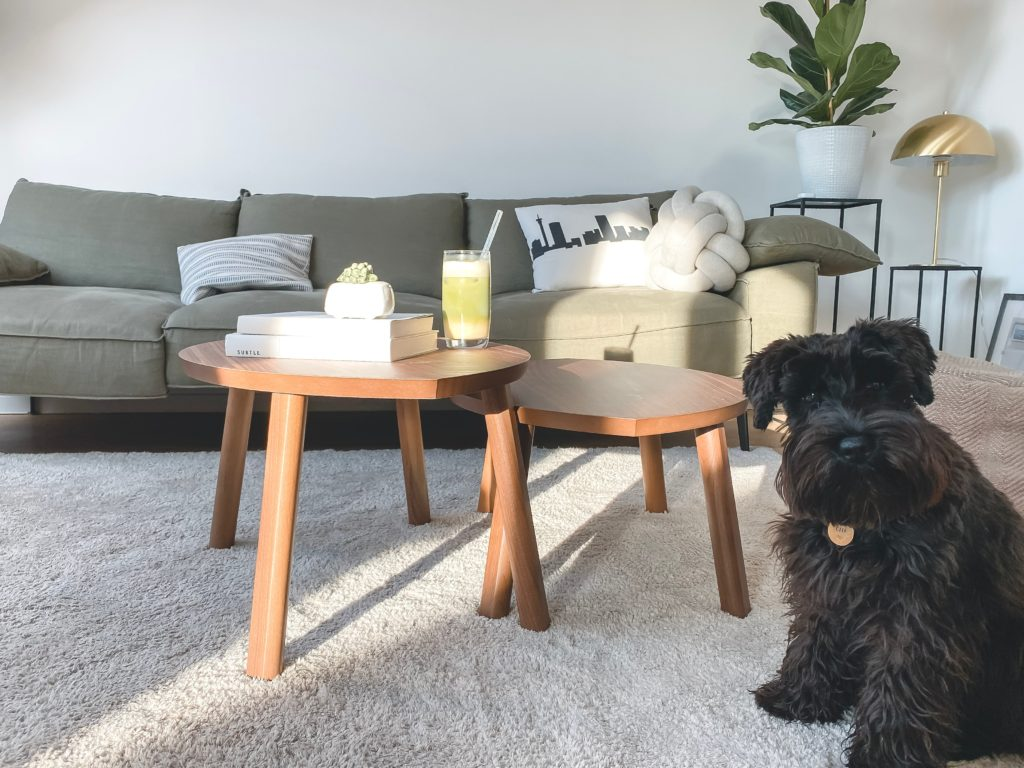Carpet type - Dog and animals